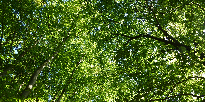 Worm's eye view of green trees